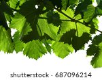 close up of green leaves in a... | Shutterstock . vector #687096214