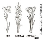 vector image. a set of flowers... | Shutterstock .eps vector #687204364