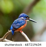 Blue Eared Kingfisher. This Is...