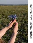 mouse hyacinth  viper onion ...