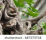 Big Trunk  Dry Wood