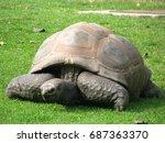 a huge turtle | Shutterstock . vector #687363370