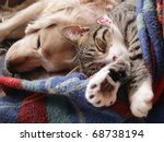 Stock photo cat and dog sleeping together 68738194