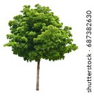 Green Tree Isolated On White...