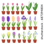 spring flowers in flower pots.... | Shutterstock .eps vector #687394804