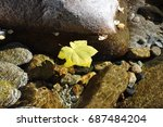 Yellow Leaf Floating Down A...