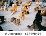 cats in animal shelter in... | Shutterstock . vector #687498499