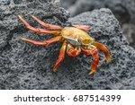 Big Crab At Rocky Environment...