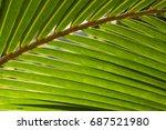 fluffy palm leaf photo... | Shutterstock . vector #687521980