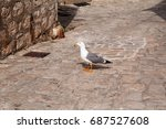 Single Seagull In The Street A...