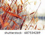 colorful foliage in the autumn... | Shutterstock . vector #687534289