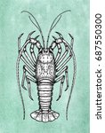 ink sketch of spiny lobster on... | Shutterstock .eps vector #687550300