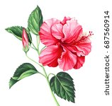 Red Hibiscus With Leaves And...