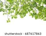 green leaves on a white... | Shutterstock . vector #687617863