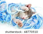 Stock photo funny kitten sleeping 68770510