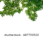 green leaf and branches on... | Shutterstock . vector #687753523
