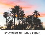 palm trees silhouette at sunset ... | Shutterstock . vector #687814834