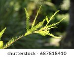 little branch of a tree | Shutterstock . vector #687818410