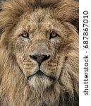 lion head   Shutterstock . vector #687867010
