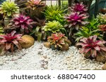 Colorful Of Bromeliad Garden ...