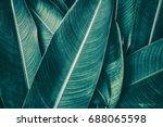 Tropical Leaf Texture  Dark...