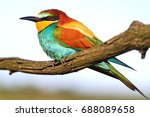 color palette at the bird's... | Shutterstock . vector #688089658