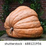 huge pumpkin   Shutterstock . vector #688121956