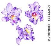 purple orchids. tropical...   Shutterstock . vector #688123609
