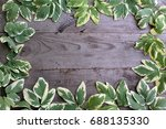 frame from goutweed variegated... | Shutterstock . vector #688135330