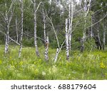 trees in the summer forest.... | Shutterstock . vector #688179604