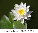 water lilies. summer flowers.... | Shutterstock . vector #688179610