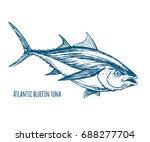 atlantic bluefin tuna.hand... | Shutterstock .eps vector #688277704
