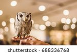 a lovely owl stands on the... | Shutterstock . vector #688336768