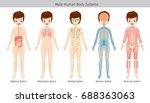 male human anatomy  body... | Shutterstock .eps vector #688363063