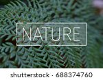 closeup green fern leaves in... | Shutterstock . vector #688374760