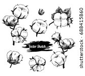 vector cotton plant  hand drawn ... | Shutterstock .eps vector #688415860