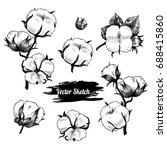 vector cotton plant  hand drawn ... | Shutterstock .eps vector #688415860