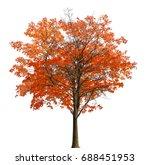 Medium Straight Autumn Maple...