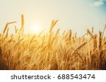 Gold Wheat Field. Beautiful...