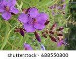 a pretty purple flower | Shutterstock . vector #688550800