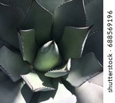 Agave. Top View Of Succulent...