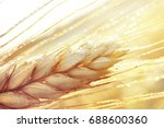 Dew Drops On A Gold Ripe Wheat...