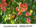 branch of peach tree in closeup | Shutterstock . vector #688619299