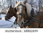 Sled Horses