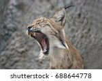 lynx lynx   Shutterstock . vector #688644778