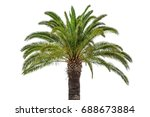 coconut palm tree isolated on... | Shutterstock . vector #688673884