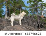 husky  siberian laika  stands...   Shutterstock . vector #688746628