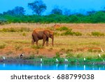 elephant goes along the river.... | Shutterstock . vector #688799038
