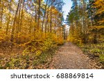 Pathway With Fallen Leaves In...