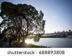 Big Tree On The River Bank